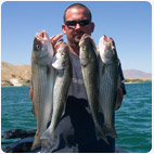 Striper Fishing Lake havasu